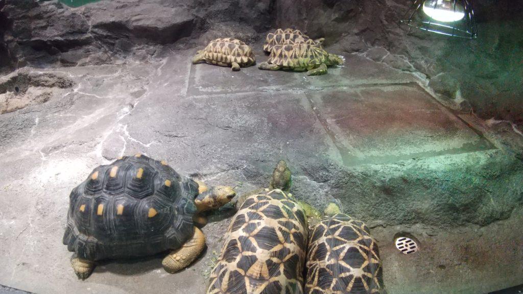 サンシャイン水族館の生き物たち